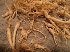 24 WOODS GROWN GINSENG ROOTS 2 years old live root - grow wild roots and seed