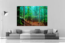 IN NATURE FOREST FORET Wall Art Poster A0 Large print