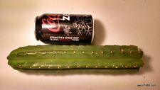 "ONE 12"" LONG MEDIUM SAN PEDRO CACTUS TIP CUTTING, T. PACHANOI, FREE SHIPPING!"