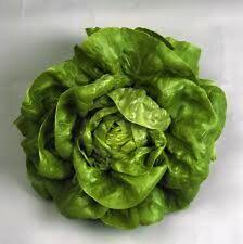 5000 seeds Bibb  lettuce seeds New seeds for 2017 season  Non-GMO Heirloom