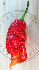 PEPERONCINO JAY'S GHOST SCORPION RED 10 SEMI CON GUIDA