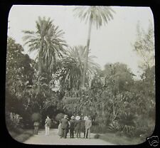 Glass Magic Lantern Slide ALGIERS - GARDENS C1890 ALGERIA