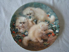 Knowles Collector Plate- Persian Kittens Cats w/ Strawberries Cat Tales  201622