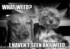 "Funny Dog Weed  Animal Photo Fridge Magnet 2""x3"" Collectibles"