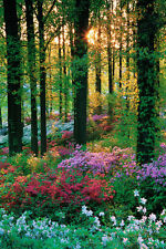 POSTER Flower Forest