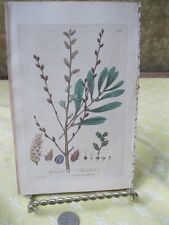 Vintage Print,SWEET GALE,British Flowering Plants,W.Baxter,1840