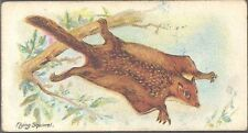 Players - Wild Animals of the World, 'issued by', no 'branch' - Flying Squirrel