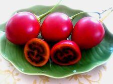 5 graines de TOMATE EN ARBRE(Cyphomandra Betacea)TAMARILLO H382 TREE TOMATO SEED