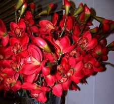 Red Cymbidium Orchid High End Quality Silk Flower Stems:Home Floral Decor 1 Ea