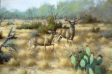 SOUTH TEXAS RUT BY DAVID DRINKARAD GICLEE ON CANVAS WHITETAIL DEER