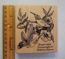 Rubber Stamp PSX Broad-Tailed Hummingbird Botanical K1464 #2453