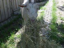Heu, 2. Schnitt, Bio 9,0 kg/Karton Futter für Hasen, Kaninchen, Schafe, Ziegen