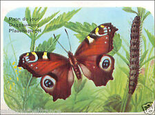 Paon du Jour Aglais Io European Peacock Inachis Butterfly IMAGE CARD 60s