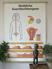 VINTAGE PULL DOWN SCHOOL CHART / POSTER OF FEMALE SEX ORGANS - REPRODUCTION