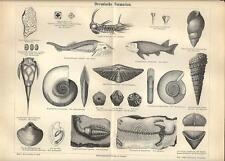 Stampa antica FOSSILI PERIODO DEVONIANO conchiglie pesci 1890 Old antique print