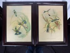 J Gould 1946 Framed Lithograph Prints Hummingbirds Heliothrix Purpureiceps Pair