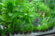 20 - 30  LIVE AQUARIUM AQUATIC coldwater  FISH TANK PLANTS WATER