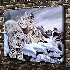 Softness of a Stare Snow Leopard Paintings HD Print on Canvas Home Decor Picture