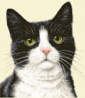 BLACK & WHITE CAT, KITTEN counted cross stitch kit