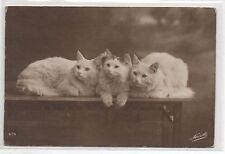 Carte postale CHAT. 3 chats sur une tabel. Vers 1918.