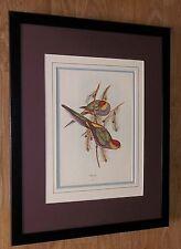 """J Gould Vintage impresión, Gould Enmarcado Arte De Pared - 20"""" 16"""" Frame, aves exóticas Arte"""