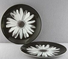 ESTATE - WEDGWOOD CHINA NIGHT & DAY BLOOMERS BLACK GERBER ACCENT PLATES PAIR 8""