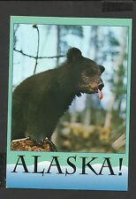 Alaska Joe Colour Postcard Alaskan Bear Phooey I'll never acquire taste for Ants
