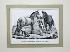 England Bergbau Horse Pferd Steinkohle Kohlentreiber Coal Mine Transport Cheval