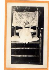 Real Photo Postcard RPPC - Cat Posed on Chair