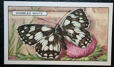 Marbled White  Butterfly   Original  Vintage Colour Card  VGC