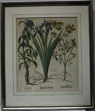 Besler Basil 1561-1629 Hortus Eystettensis Stinking iris original with letters