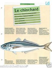 FICHE FISH Trachurus trachurus Atlantic horse mackerel Chinchard commun