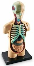 31 Pc Realistic Human Body Model Resources Learning Anatomy Medical School Set