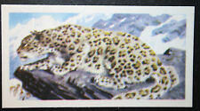 Snow Leopard    Vintage Colour Card  # VGC