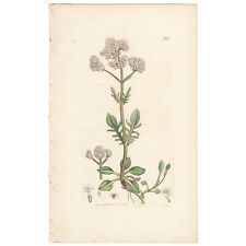 Sowerby antique 1799 hand-colored engraving, Pl 628 Small Marsh Valerian