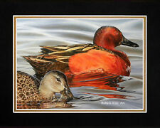 """Matted """"Cinnamon Teal"""" Waterfowl Duck Print 8x10 Mat by Realism Artist Roby Baer"""