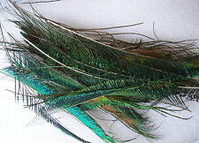 4 Green and Blue Peacock Sword Feathers - surplus to requirements