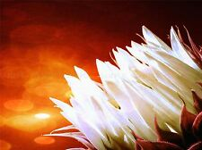 NATURE FLOWER WHITE PETAL ORANGE PLANT POSTER ART PRINT PICTURE BB121A