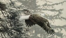 EAGLE ART PRINT - Through the Firs by Ron Parker Wildlife 24x36 Poster Soaring