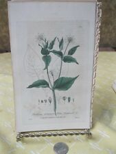 Vintage Print,WOOD STITCHWORT,British Flowering Plants,Baxter,1840