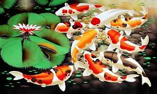 "3.25"" Spotted Japanese Koi Fish in lily pond Art Print STICKER. Aquarium, pond."