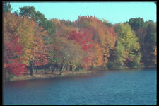 380023 Colorful Trees By A Lake New England A4 Photo Print