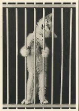 POSTCARD / CP / EDITIONS ADMIRA & VINCE HEPTIG / PRISONNIER / TOP / / CAT CHAT