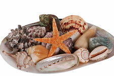 Beach Mix (medium) 12 Shells with Starfish, Bag of Mixed Seashells, Sea Shells