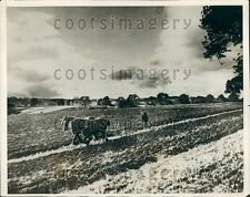 1927 British Man w Horses Plows Field in Autumn Masham Yorkshire Press Photo