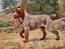 GERMAN WIREHAIRED POINTER DOG GREETINGS NOTE CARD DOG WITH BIRD