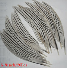 20pcs beautiful natural pheasant  feather 6-8inch/21#