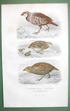 BIRDS Red & Grey Partridge Quail Partridge - 1860s COLOR Print by Buffon