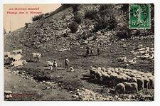 AGRICULTURE CAMPAGNE scenes champetres LE MORVAN paturage de vaches et moutons