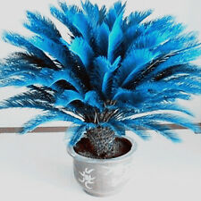 100Pc Beautiful Blue Cycad Seeds Sago Palm Tree Seeds Bonsai Seeds Garden Decor